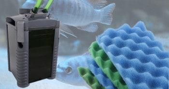 Filterung und Wasserwechsel